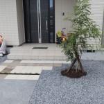玄関前は300角平板シンボルツリーはシマトネリコ